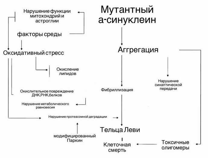 Анатомия синдрома Паркинсона