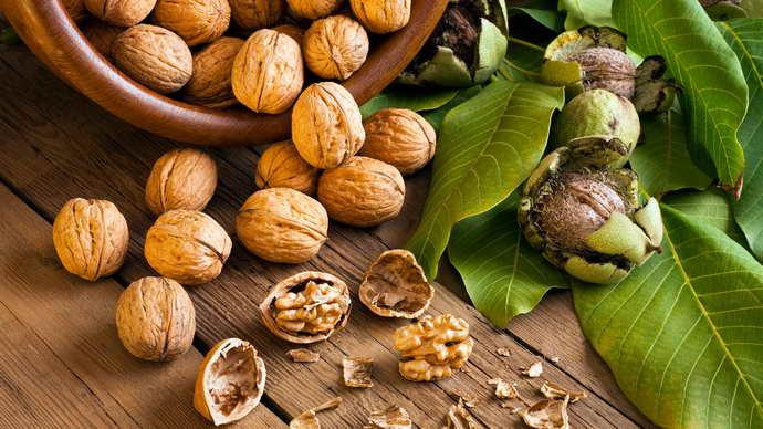 Грецкие орехи для чистки сосудов головного мозга