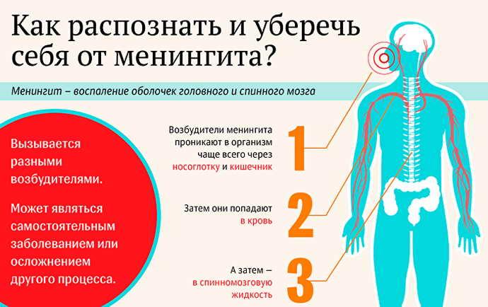 Возбудители болезни менингит