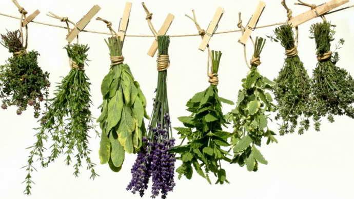 Лекарственные травы для улучшения мозгового кровообращения