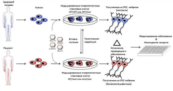 о чем говорят исследования ученых о болезни Паркинсона