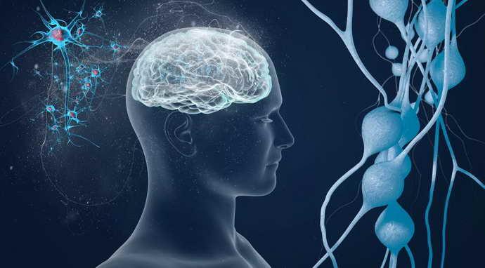 Есть ли генетическая предрасположенность к рассеянному склерозу