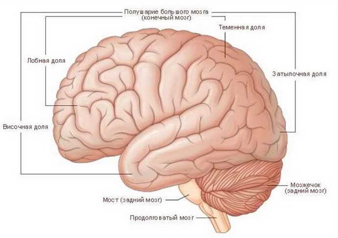 РЭГ сосудов головного мозга выполняется