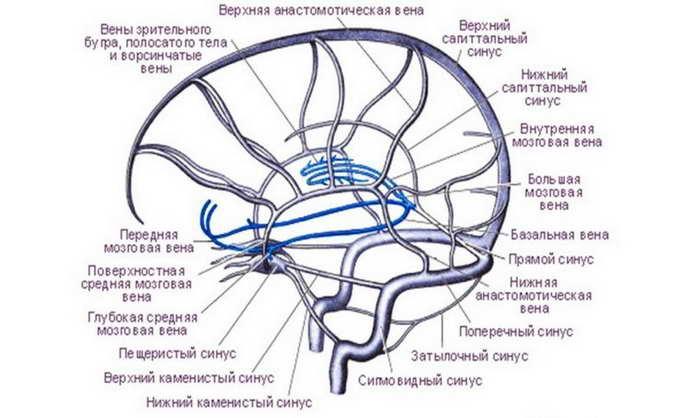 Венозная дисфункция головного мозга особенности