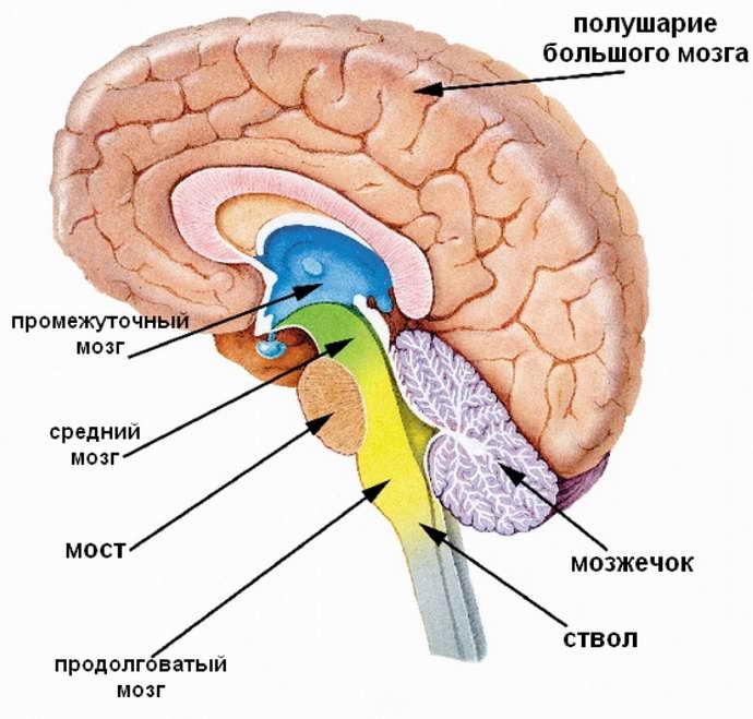Виды абсцессов мозга