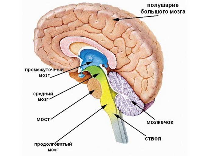арахноидит головного мозга симптомы