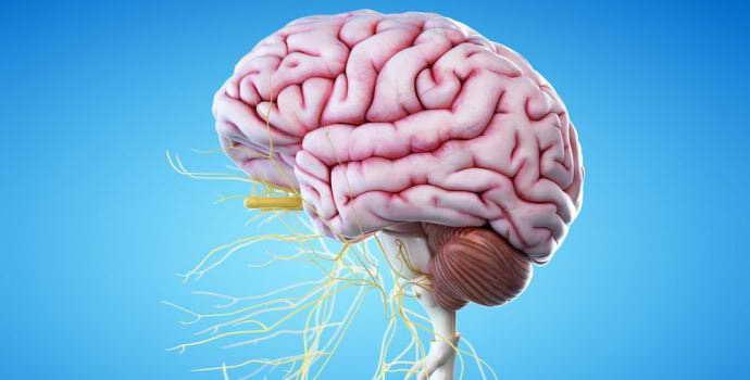 Дисфункция срединных структур головного мозга: что нужно знать о проявлении