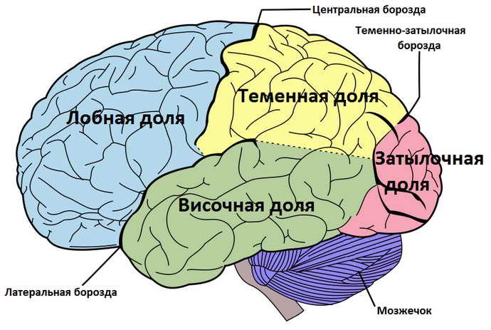 органическое поражение головного мозга где происходит