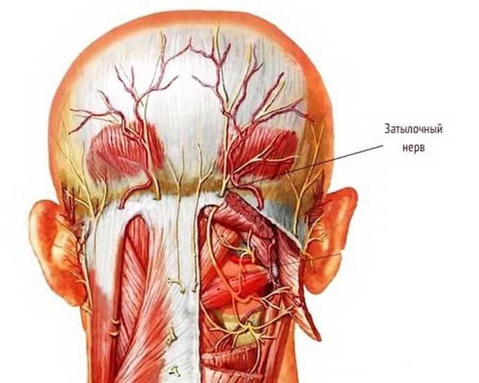 невралгия затылочного нерва симптомы и лечение