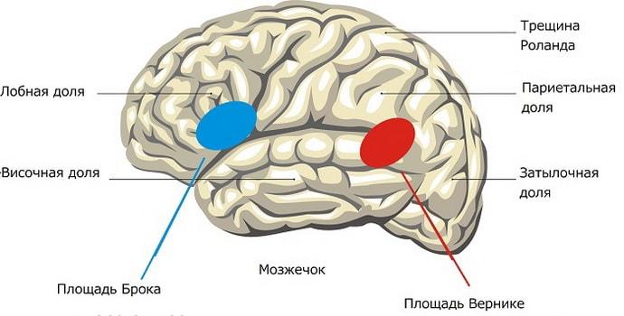 Симптомы афазии сенсорной
