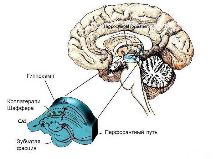 Взаимосвязь между функцией памяти и алкоголем