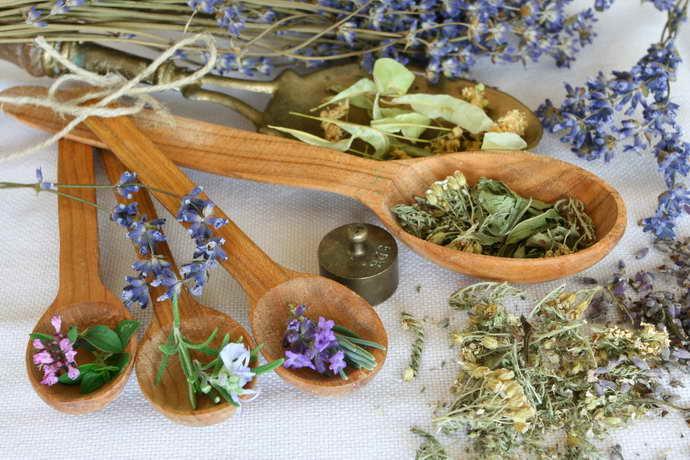 Сбор растений для терапии грыжи