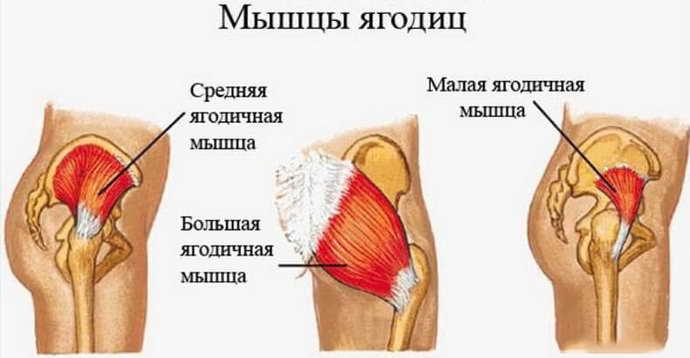 Анатомические особенности болей в ногах при остеохондрозе