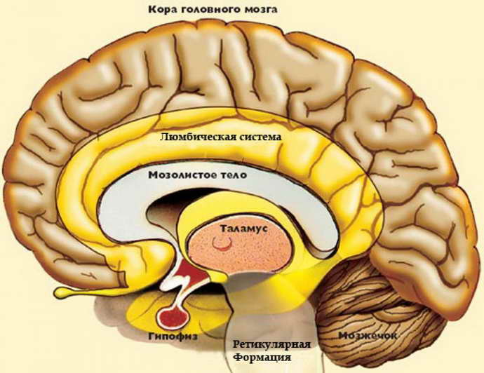 Почему возникает отек мозга при инсульте