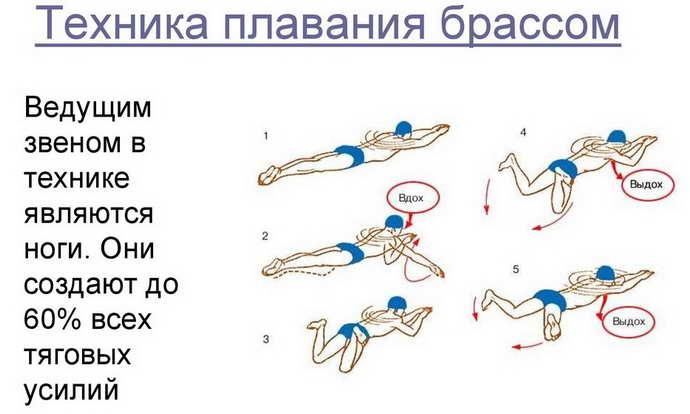 Стили плавания и основные упражнения при грыже позвоночника