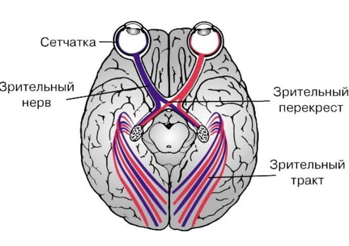 Как возникает ретробульбарный неврит