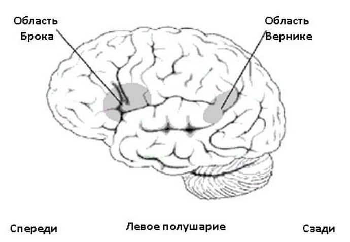 Симптомы сенсоматорной афазии