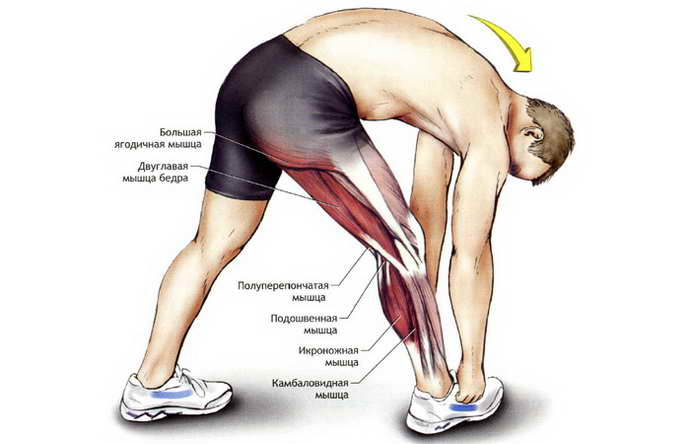 какие мышцы могут вызывать судороги