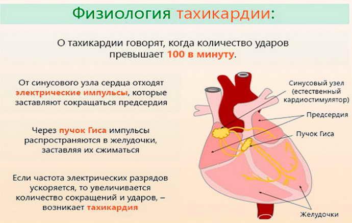 Может ли остеохондроз вызывать учащённое сердцебиение