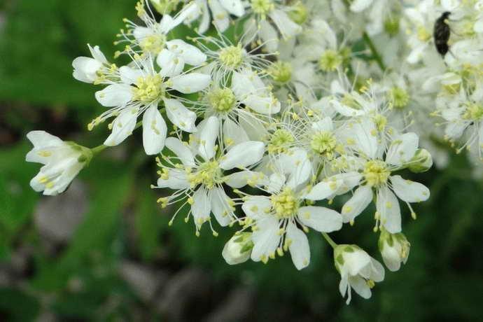 цветы календулы от остеохондроза