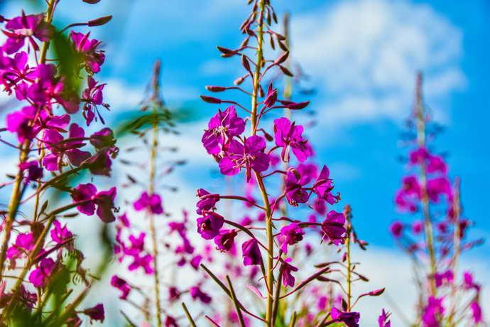травы от восполений остеохондроза